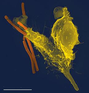 immune-system-closeup
